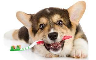 Jouw hond en zijn gebit: van hondensnoepjes tot hondentandpasta!