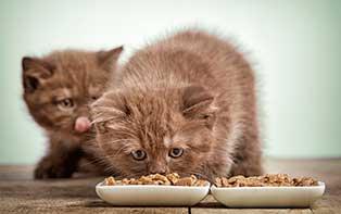 Ontdek de tips van je online apotheker voor het juiste voer voor jouw kat