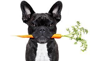 Zelf vegetariër, dus je hond of je kat ook? Een goed idee of niet?