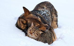 Tips van je online apotheker voor honden en katten buiten in de winter