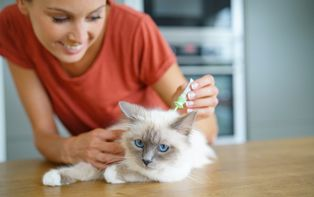 Tips van je online apotheker om je huisdier te beschermen tegen parasieten