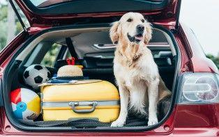 Onze tips om op vakantie te vertrekken met je huisdier
