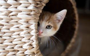 De tips van je online apotheker om stress bij je kat te verlichten