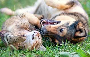 Wassen en hygiëne: bescherm de vacht van je huisdier!